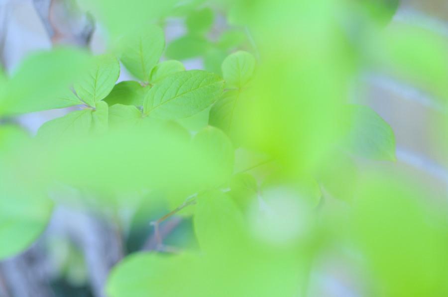 green,自然,nature