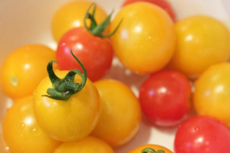 採れたてトマト ご近所付き合いの魅力
