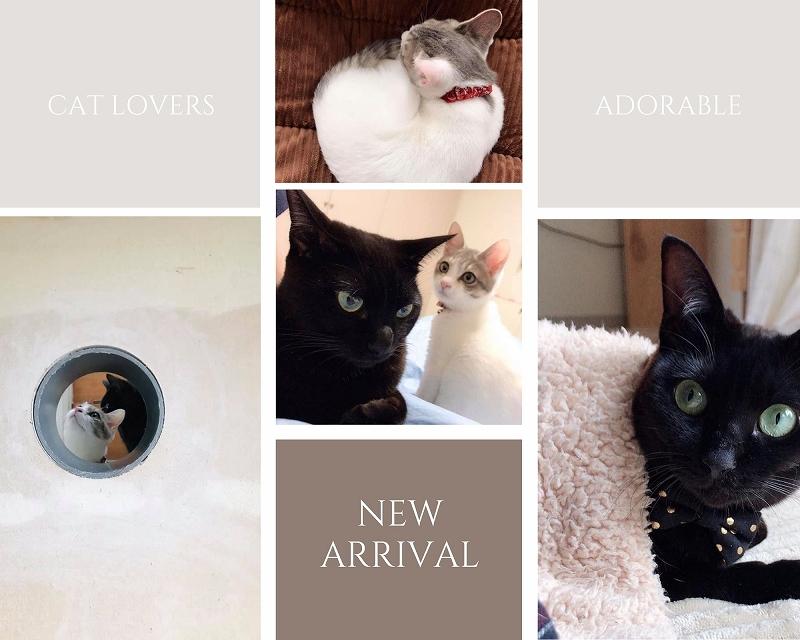 新作 for CAT LOVERS ネコ好きさん必見のネコシリーズの華奢ジュエリー